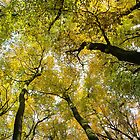 Autumn Gold by KUJO-Photo