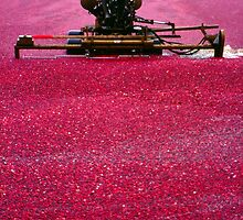 Cranberry Harvest by Eva Kato