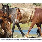 Virginia Range Wild Horses, TRI, Nevada by Ellen  Holcomb