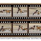 """Warrior"" & ""Spirit"" wild stallions of the Virginia Range, Reno, NV by Ellen  Holcomb"
