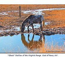 "Reflections of ""Ghost"" wild Stallion on the Meadow, Reno, NV by Ellen  Holcomb"