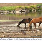 Reflections &amp; Ripples, small band of wild mustangs on the Pond, TRI Nevada by Ellen  Holcomb