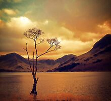 Famous Tree of Lake Buttermere by Citizen