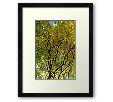 Salcey Forest in Autumn Framed Print