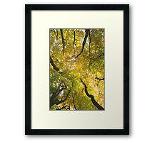 Autumn Glory Framed Print