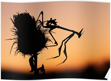Silhouette by jimmy hoffman