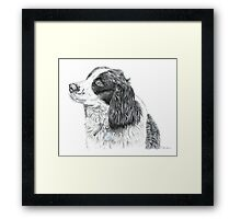 Paddy - King Charles Spaniel Framed Print