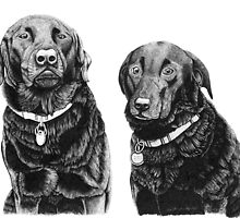 Josh and Toby - Black Labradors by Paul Stratton