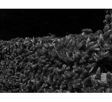 Bees in Black and White Photographic Print