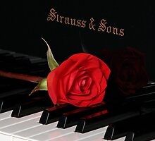 Rose in red tone with piano by cgarciaferro