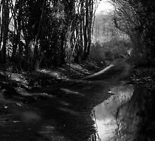Reflected Country Lane by Dave Godden
