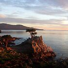 The Lone Cypress by podspics