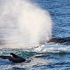 Thar She Blows! - Cape Code Massachusetts by Debbie Pinard