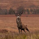 Monarch Of The Glen by Brian Kerr