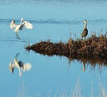 Great White Egret and Great Blue Heron by Cal Kimola Brown