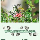 Bushwalk Australia Flora and Fauna Calendar 2013 by Bushwalk