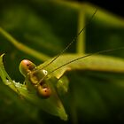 Praying Mantis by Kerrod Sulter