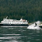 Un-Cruising Alaska by Jocelyn Pride