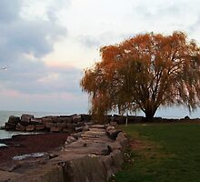 Edgewater Park by Nevermind the Camera Photography