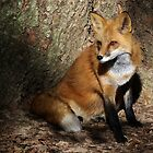 Fox in the Spot Light by Paulette1021