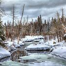 Winter Rabbits in Northern Maine by Gary Smith