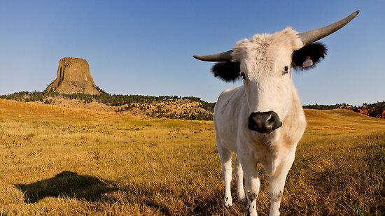 Longhorn Talent at Devils Tower by Alex Preiss