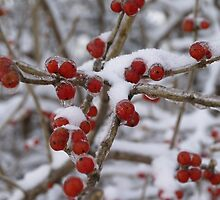 Winter Berries by besoriginals