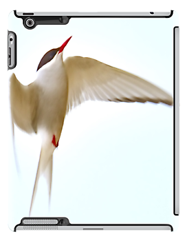 Arctic Tern iPad Case by Steve