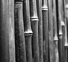 Bamboo Fence iPhone/iPod Case by Michael Baker