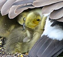 Under Momma's wing by Heather King