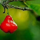 Rose Apple by Dimuthu  Sudasinghe