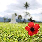 Kokoda Memorial Poppy by BenClarkImagery