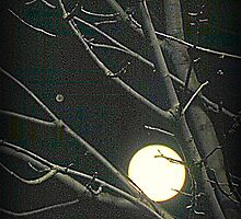 The Moon and Jupiter by TrendleEllwood
