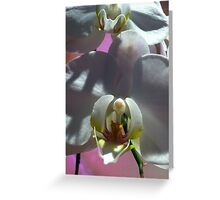 Once upon an orchid Greeting Card