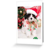 I Am an Elf, Not a Gift!  Greeting Card
