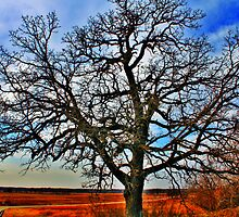 Scuppernong Tree by EBArt