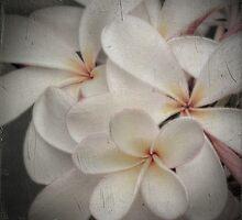 Vintage Plumeria by Karen Lewis