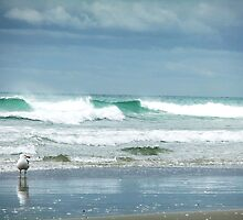 Seagull at Maunganui Beach by jlv-