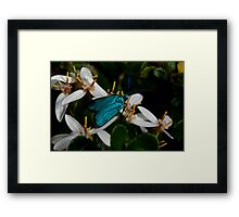 Iridescent Insect Framed Print