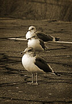 Gull Parking Only by Corri Gryting Gutzman