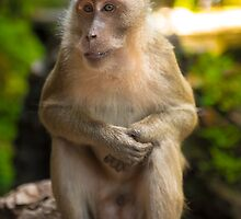 Monkey V by LAPhotographyGC