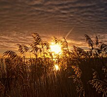 Morning in the Eemmeer by THHoang