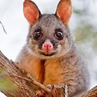 A Brush with a BrushTail by kwill