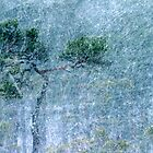30.11.2012: Pine Tree and Blizzard by Petri Volanen