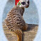 Christmas Kit by Krys Bailey