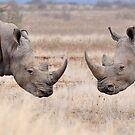 Rhinoceros by jeff97