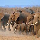 Elephants by jeff97