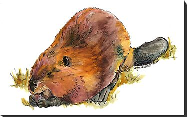 Pudge the Beaver by Lynn Oliver