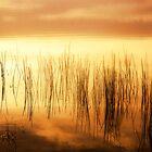 Golden Hour by JMDasso