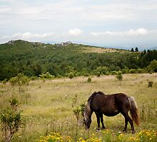 Grayson Highland Pony. by jeastphoto